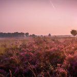 Hardlopen in Hilversum